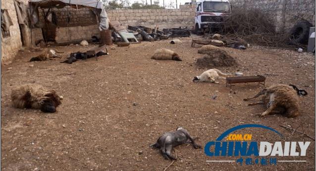 动物尸体遍地照片被翻出 生化武器疑云笼罩叙利亚