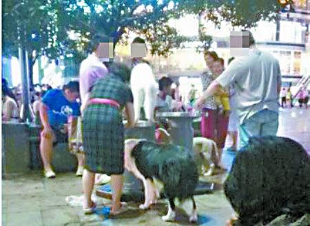 重庆市民抱宠物狗直接舔公共饮水机(图)