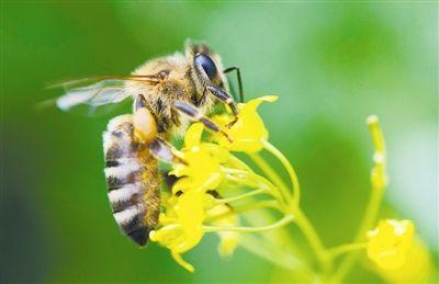 小蜜蜂n720   d电路图