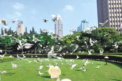 """上海人民广场白鸽结束""""禁闭"""""""