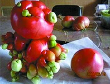日本变异蔬菜走红