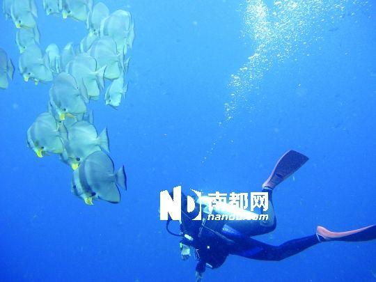 在美丽的海底闲庭信步,可爱的鱼儿从眼前悠然而过.