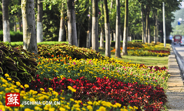 花境植物景观手绘分析
