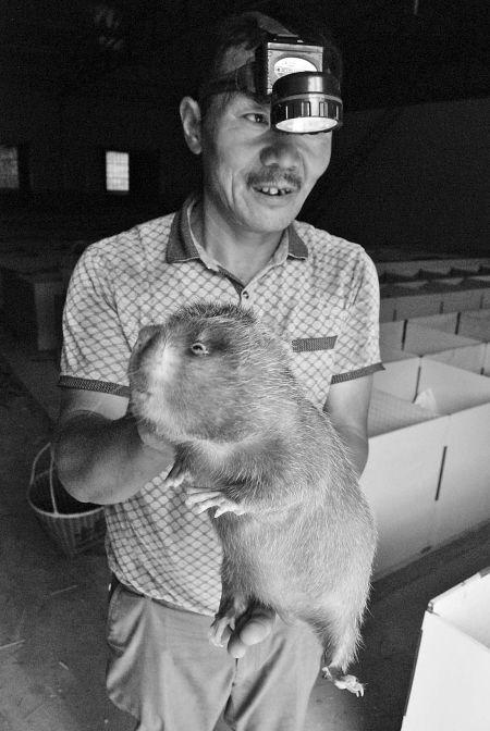 一只竹鼠卖400多元 90后小伙竹鼠养殖效益高