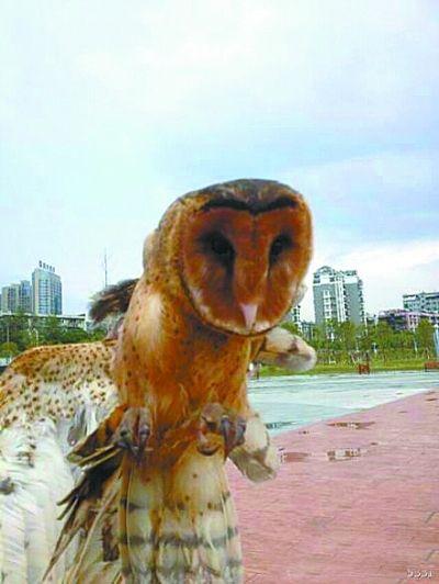武汉:猴面鹰闯入拆迁房 居民以为野猫(图)