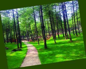 花园的海棠花季.为迎接今年中秋和国庆,大木花海景区推出了系列