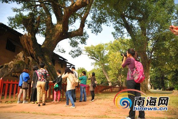网媒记者在围观叶坪景区内的百年古树(南海网记者徐开飞 摄)