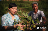 在大山里的生活意味着清苦和艰辛,何新庆养过猪、种过水稻,那时候每年的收入只够勉强生活。三年前,林业站的工作人员小丁为他带来的油茶树苗,彻底改变了他的生活。