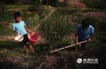 何老的20亩油茶树,老俩口像带孩子一样细心呵护着。最近,何老的身体越来越差,不能干重活,有些时候,孙子会帮助奶奶一起打理油茶树。