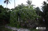 中原南洋小镇的华侨特别多,建筑风格统一,到处是美丽的花房,它是南洋人最著名的发明之一。房屋被郁郁葱葱的绿色植物覆盖,既环保又漂亮,尽管当地天气炎热,但走在其中,我们还是能够感受到丝丝凉意。