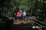 """告别了蓝天碧水,大家来到了文昌著名的旅游景点八门湾绿道,身处千姿百态的红树林当中,""""海上森林公园""""尽收眼底,红树林触手可及。"""