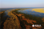 江西鄱阳湖是世界上最大的鸟类保护区,枯水季节水落滩出,野草丰茂,芦苇丛丛。每年秋末冬初,成千上万只候鸟从俄罗斯西伯利亚、蒙古、日本、朝鲜以及中国东北、西北等地来此越冬。《凤见》摄影师借助无人机在鄱阳湖核心区域进行航拍,把冬季鄱阳湖最美丽的一面呈现出来。