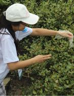 红树林生态教育