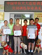 中国导盲犬