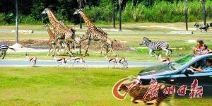 香江野生动物世界。