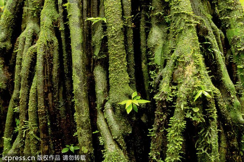 """南美洲哥伦比亚_走进亚马孙热带雨林 探索神秘的""""地球肺叶""""_频道_凤凰网"""
