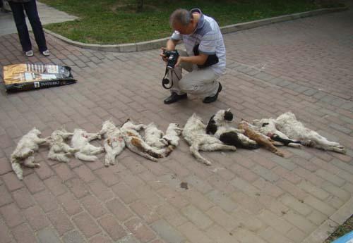 人间万象_北京一小区13只流浪猫遭虐杀 眼睛被挖出(图)_资讯频道_凤凰网