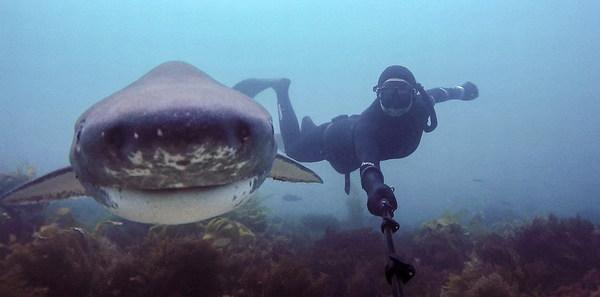 美国人自拍性交视频_美国潜水员巧用自拍杆与海底生物合影(高清组图)