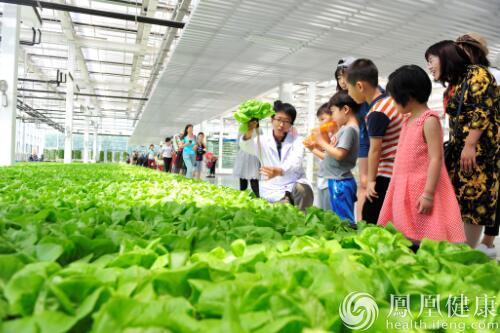 奇妙农场_农业真奇妙 中粮智慧农场里的趣味儿童节_凤凰健康