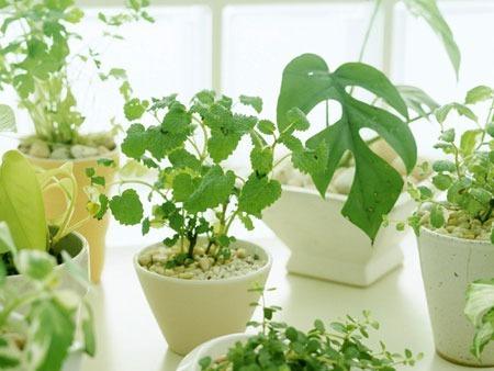 办公室或面对老板,可在办公桌上摆放几盆绿色植物