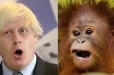 先锋伦伦人与动物电影_名人因与某些动物长得相像而经常受到恶搞.
