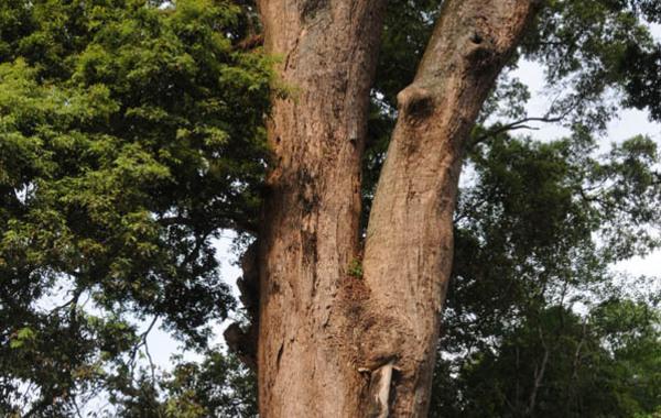 老宅背靠郁郁葱葱的山林,房前一棵据考证有1200多年树龄的金丝楠古树,足足有6人合抱粗。古树下一汪清水,据传是当年红军将领的饮马池。王玉山 摄…