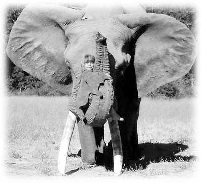 人与动物的愹�.�+���_这些惊心动魄的故事                    相信人与动物可以\